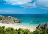 Bermudian Rose 1 Kişilik