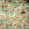 Bülbül Yuvası Yaprak Hamuruyla Tarifi