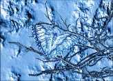 Butterfly Frozen