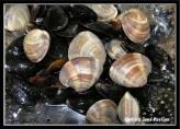 Deniz Ürünleri Yahnisi