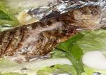 Fırında Kofana Balığı Tarifi