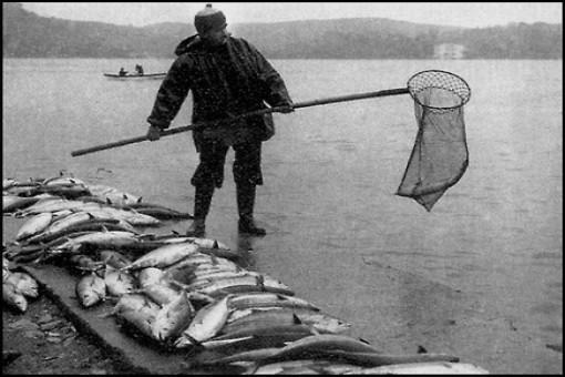 Palamut Balığı Köftesi